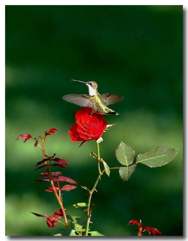 Jardins et fleurs for Fleurs et jardins